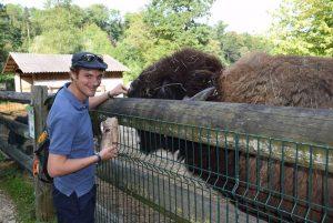 Tierpate mit Bison