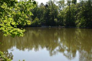 Teich im Tierpark Stadt Haag