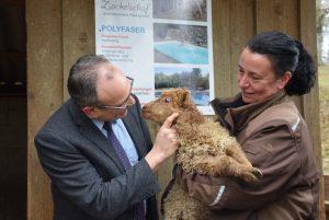 Tierpatenschaft Zackelschaf