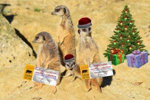 Erdmännchen Weihnachtsgeschenk Jahreskarte