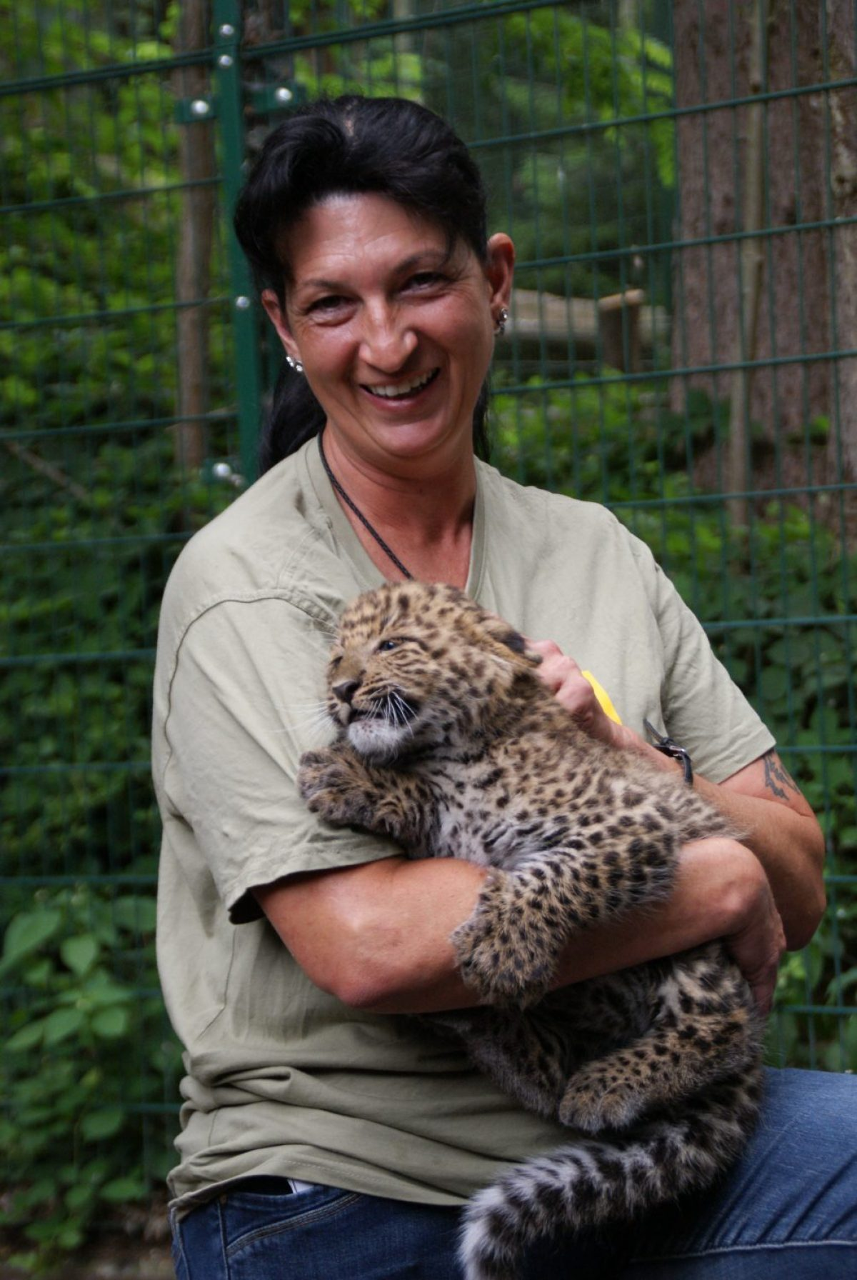 Leoparden Jungtiere Pressetermin