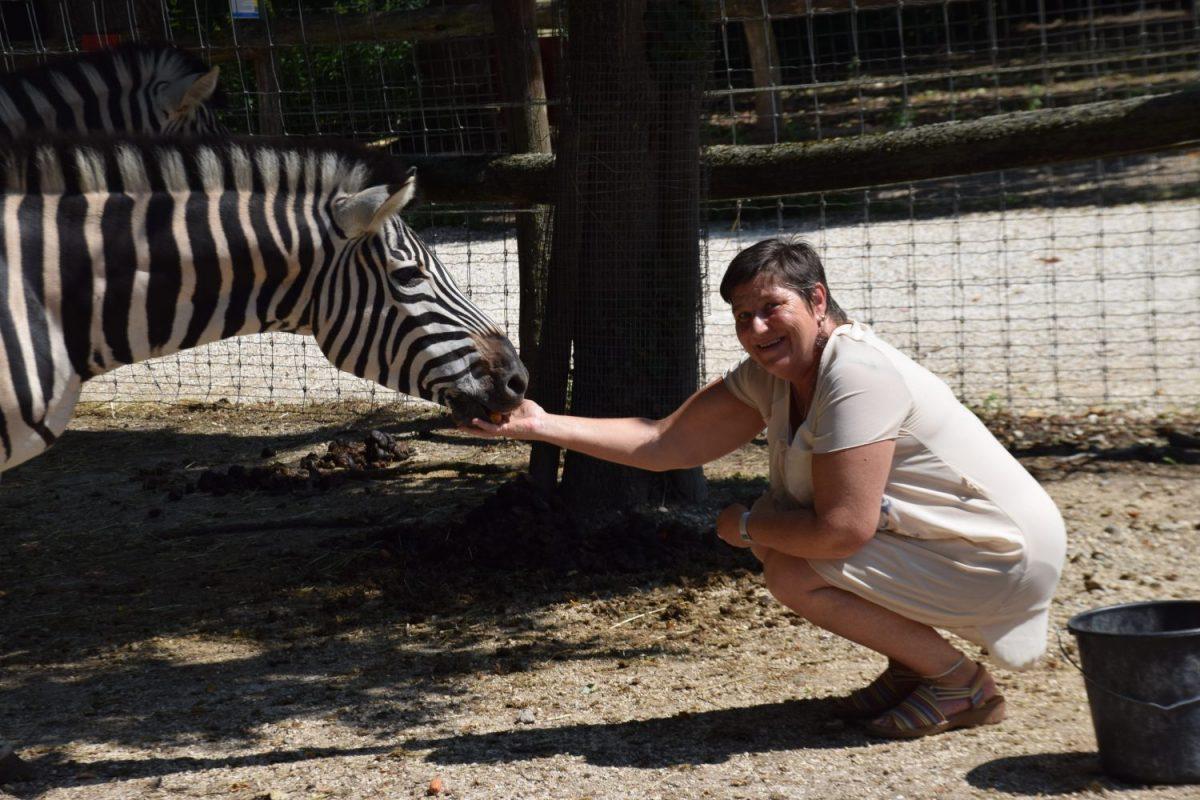 Tierpatenschaft Zebra Zea