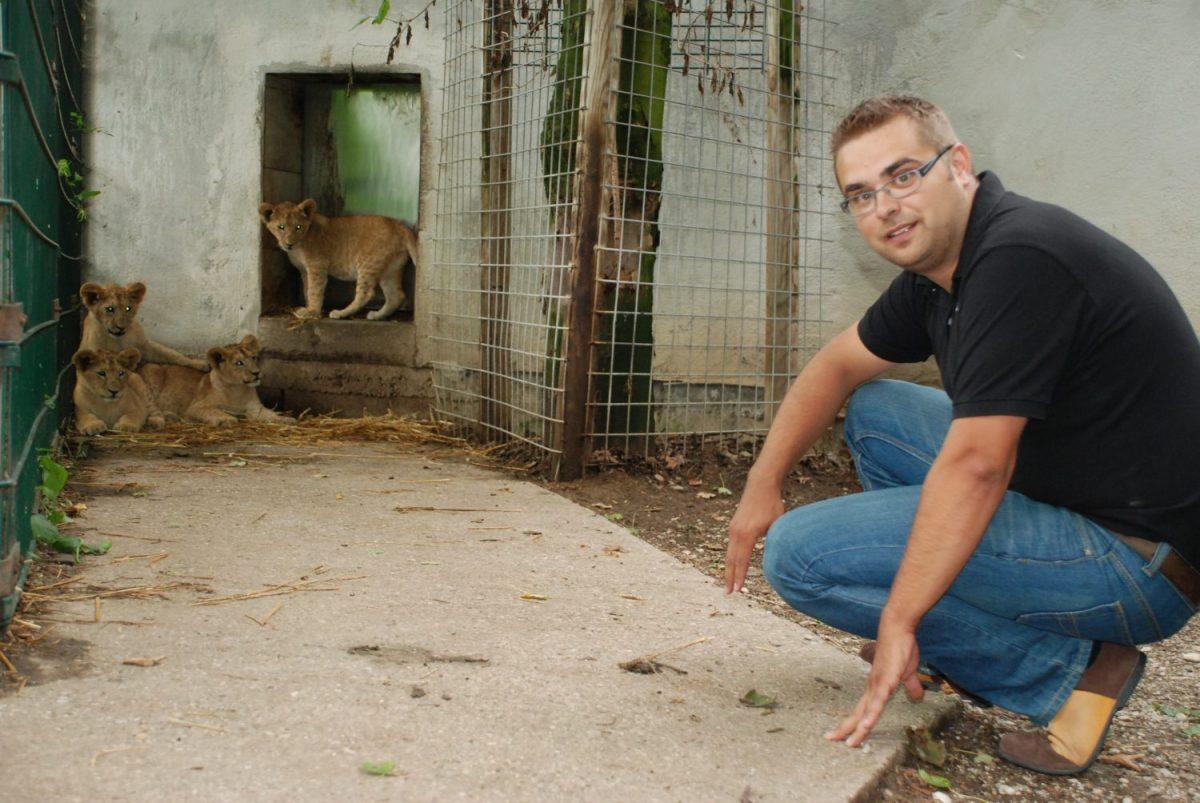 Tierpatenschaft Löwe Giuseppe
