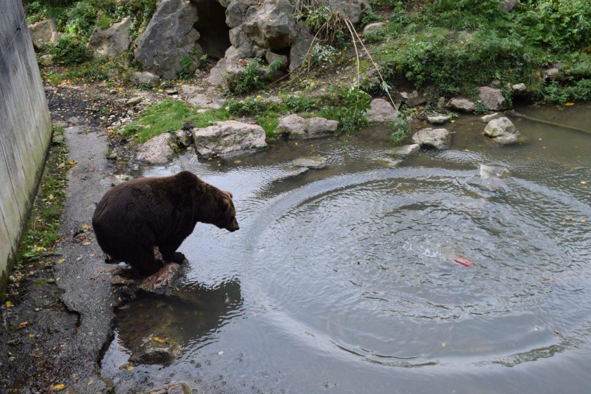 Patronanzfeier Braunbär Arkas