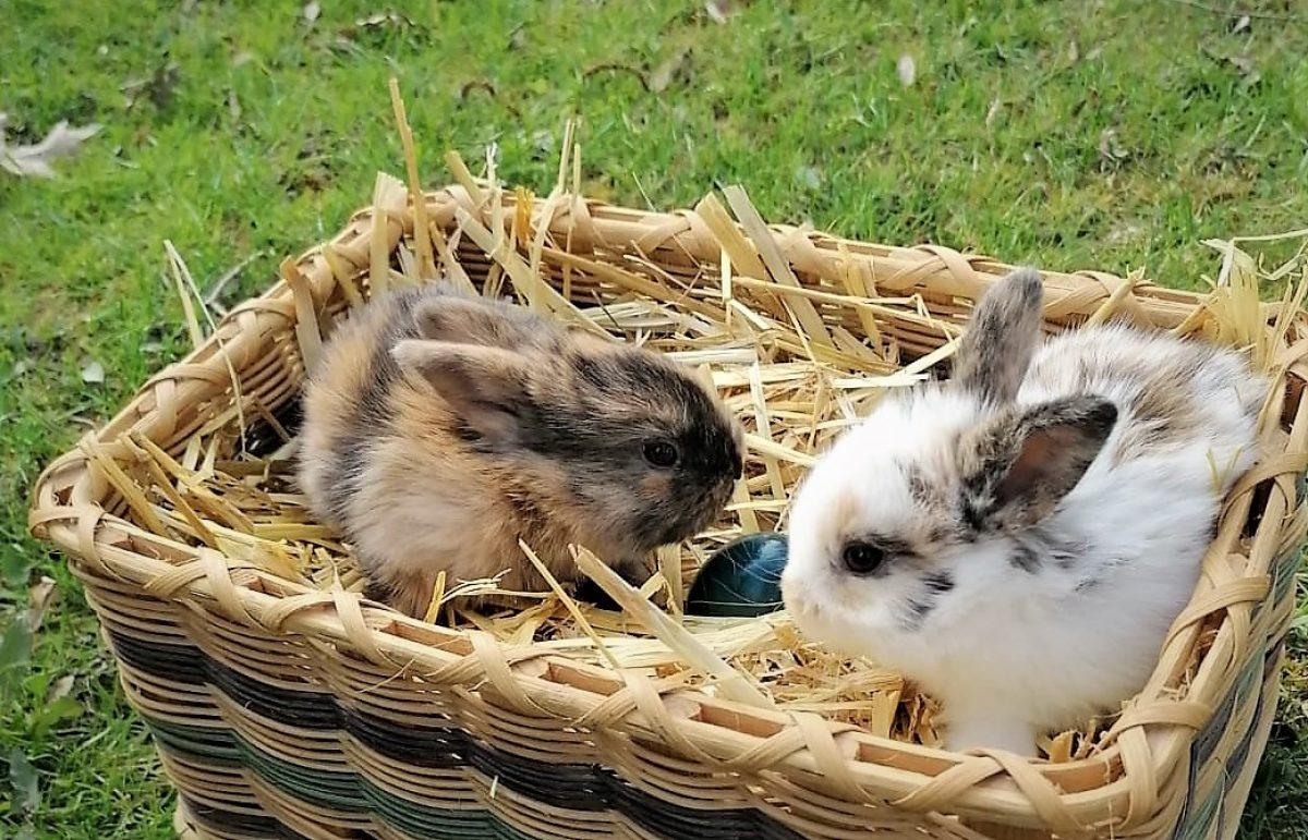 2 Hasen mit Osterei