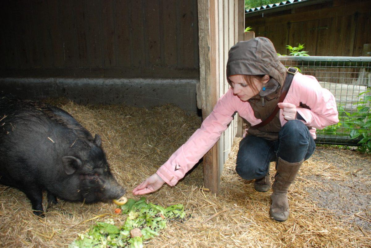 Tierpatenschaft Minischwein Ariadne