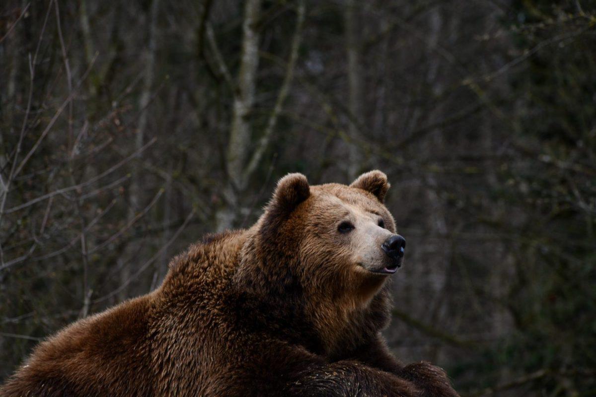 Braunbär © Tierpark Stadt Haag